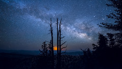 Spiral Arm (Night Scapes) Tags: nightphotography nightscape nightsky bristlecone milkyway steverengers