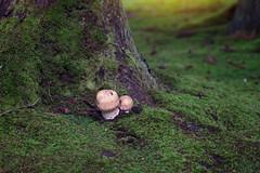 cute lil fungi (lau7171) Tags: fungus fungi field grass park forest nature canon 6d