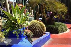 marrakech jardim majorelle (Dicas e Turismo) Tags: african viagem marrakech palais majorelle medina souks turismo viagens menara marrocos koutoubia marroco jemaaelfna mamounia mesquita frica roteiro marraquexe dicas