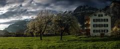 Berschis (Elliott Bignell) Tags: apple fruit schweiz switzerland spring suisse blossom ostschweiz bloom blossoming blooms svizzera blume frhling flums churfirsten blhen walenstadt berschis blht churfrsten bltzeit