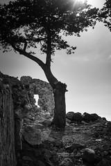 Monolithos No.02 (Sebastian (sibbiblue)) Tags: blackandwhite griechenland greece fineart bw monochrome mastinlab urlaub tree rhodos mai fujixpro2 2016 pfingstferien fujifilm monolithos