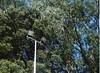 You light up my life (Matthew Paul Argall) Tags: 110 110film lightfixture outdoorlight tree trees lomographyfilm green olinda