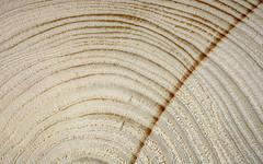 Holz 190/366 27/52 (Skley) Tags: foto bild holz stamm 2016 querschnitt 2752 detailaufnahme vollholz 190366 stammquerschnitt
