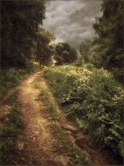 in the expectation of rain. (Tarusa) (odinvadim) Tags: travel sunset painterly rain forest landscape evening textures textured iphone iphoneart iphoneography iphoneonly mytravelgram painterlymobileart