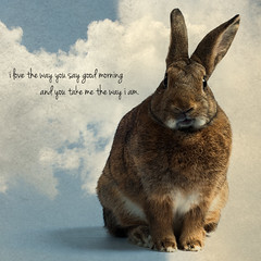 Good Morning! (Jeric Santiago) Tags: pet rabbit bunny animal lyrics conejo lapin hase kaninchen   compositephotography thewayiam ingridmichaelson winterrabbit