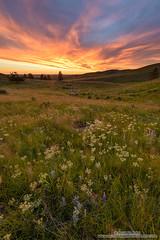 Last Chance (michael ryan photography) Tags: flowers light sunset color oregon joseph roadtrip wallowa wander foreground wallowamountains michaelryanphotography