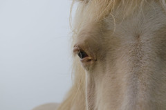 Pferd Detail - Horse (Der Gnurz) Tags: horse detail eye animal pferd auge tier nikond5100