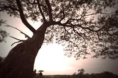 - (juanreb) Tags: parque tree canon landscape arbol concordia entrerios sancarlos