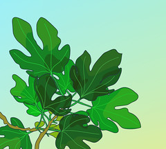 baby figs (polina izvekova) Tags: botanical plants illustration illustrator drawing adobeillustrator summer vector vectorart botanicalart plant