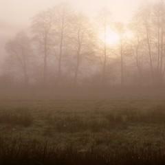 *** (pszcz9) Tags: morning sun mist tree nature fog sunrise landscape spring sony meadow poland polska poranek a77 soce wiosna przyroda mga drzewo beautifulearth ka pejza wschdsoca