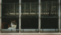 Mi segunda casa. (Gatosaurio) Tags: blue winter boy wild blackandwhite bw orange woman white lake man black pez love girl beautiful smile sunglasses azul backlight night hair de beard lago happy ojo glasses noche mujer eyes sand hands pretty chica wind serious cigarette gorgeous smoke wave lips fisheye arena blond linda rubia invierno gafas chico loch fumar naranja olas hombre barba cigarro espa parell