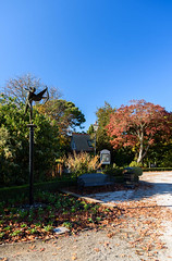 Aiming High (Jocey K) Tags: autumn trees newzealand christchurch sky plants leaves gardens may eros monavale sculputre