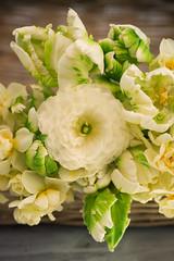 cream ranunculus and tulips (photoart33) Tags: stilllife green petals spring cream ranunculus tulip