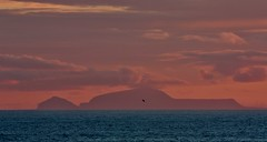 Lone Flight IMG_1964 (Ronnierob) Tags: sundown foula shetlandisles