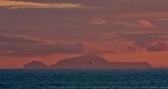 Lone Flight IMG_1964 (Ronnierob) Tags: sundown foula shetlandisles