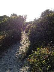 (BCalico) Tags: green beach sand path