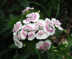Flowers (?) (ali eminov) Tags: flowers spring seasons fourseasons springtimeblooms