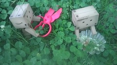 (cryssychu) Tags: flowers outside lili clovers raz danbo danboard