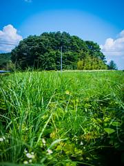 PhoTones Works #2991 (TAKUMA KIMURA) Tags: cloud plant flower nature grass landscapes scenery power pole      kimura   takuma   ep5  photones