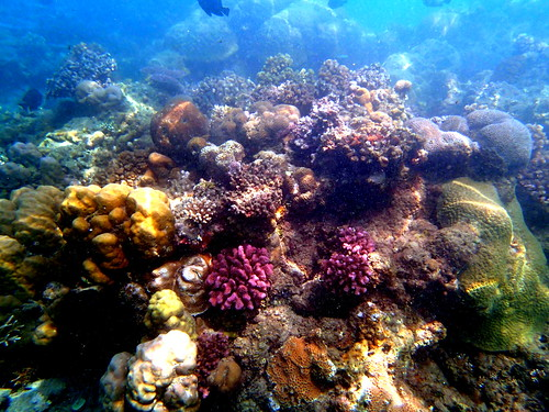 Coral reefs in Mbonege beach, Honiara, Solomon Islands. Photo by Sharon Suri, 2013.