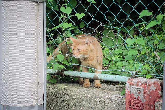 Today's Cat@2013-09-11