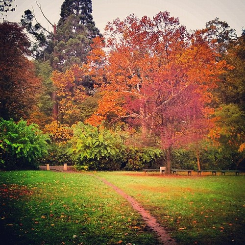 Добрутро II. #good #autumn #morning #forest #park #trees #color #nature