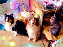 A big pack! (Mio) Tags: pet black home dogs nature field animal cane cat collie candy kitty sierra mao lassie gatto hermione hermio dogmorgan
