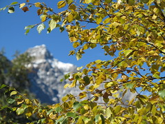 Karwendel Alps Alpen Tirol Tyrol Tyrolia Austria sterreich EU (hn.) Tags: autumn copyright mountain mountains alps fall nature berg leaves austria tirol leaf sterreich heiconeumeyer europa europe laub herbst natur eu autumnleaves september berge alpine thealps alpen blatt bltter tyrol herbstlaub gebirge karwendel mountainrange copyrighted bergig mountainous autumnleaf tyrolia karwendelgebirge