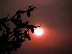 at sunrise (Radoslav Radev) Tags: morning sky sun beach sunrise ilobsterit