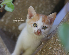 Today's cat 2014.3.6 (ladious666) Tags: life animal cat alive catsplanet