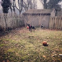 "Backyard adventures. #spring #mupp #urbanrockpup #dogs #dogsofinstagram • <a style=""font-size:0.8em;"" href=""https://www.flickr.com/photos/62467064@N06/13013906304/"" target=""_blank"">View on Flickr</a>"