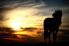 After nine days I let the horse run free (Cristian tefnescu) Tags: sunset red wild sky horse orange sun rot fire sonnenuntergang fav50 horizon dmmerung pferd fav250 fav100 fav200 fav300 fav150 outstandingromanianphotographers