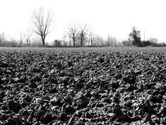 Terra (Bobbo G) Tags: bw italy art blackwhite country olympus campagna filter stylus terra xz2