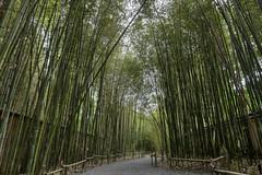 Bamboo forest, Cheekwood Botanical Garden, Nashville, Tennessee (Chuck Sutherland) Tags: garden tn nashville tennessee davidson botanicalgarden cheekwood davidsoncounty cheekwoodbotanicalgarden cheekwoodbotanicalgardenandmuseumofart
