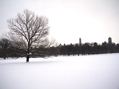 Sheep Meadow in Snow