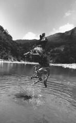 Pakita (Roberto Gramignoli) Tags: pellicola animali cane cani salto blackandwite bw dog jump