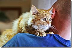 CONSTANTIN (jawadn_99) Tags: cats animal cat explore 129favorites 129faves