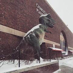 Winter Storm Juno (hyperion327) Tags: winter snow storm dinosaur massachusetts blizzard tyrannosaurusrex museumofscience 2015 winterstormjuno