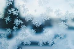 Fern frost (Christine H.G.) Tags: flowers light fern ice beautiful canon frost dof crystal bokeh m iceflowers eosm fernfrost canonefm22mmf2stm