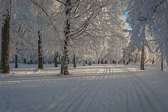EPS_1501_FROSTY-WINTER-MARKET-232-edit (JP Korpi-Vartiainen) Tags: park street trees winter house snow cold building tree finland landscape living scenery frost january sunny frosty arctic talo lumi talvi maisema koti tammikuu puisto wintry rakennus kaupunki asuminen puut katu huurre kylmä aurinkoinen pakkanen omakotitalo 21c talvinen omakoti arktinen huurteinen omakotialue huurteiset jpkorpivartiainen©2015