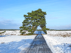 IMG_1685 (pinktigger) Tags: park winter snow holland tree netherlands dutch landscape path nederland lane hogeveluwe naturalreserve