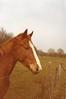 Hoofd (streamer020nl) Tags: horse holland head 1984 nl paard llh paardenhoofd louiselh