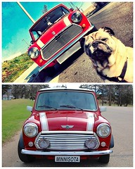 Its a tie. Thats right, this #PhotoChallenge has two champions! Congrats to Blake W. for Minnisota and to Chris C. for showing off a Classic Mini from canine perspective. Great shots of red #ClassicCoopers. - photo from miniusa (orlandomini) Tags: from chris red two usa classic for this photo orlando florida shots c united w great perspective may tie canine mini right off 03 cooper states blake showing has champions clubman congrats its 2016 photochallenge thats countryman paceman miniusa orlandomini 0231pm wwwiwantaminicom httpwwwfacebookcompagesp137773706313 classiccoopers httpswwwfacebookcomorlandominiphotosa10152516145846314107374185013777370631310153647691186314type3 httpsscontentxxfbcdnnethphotosxft1t3108s720x72013161699101536476911863146229229770747331013ojpg minnisota