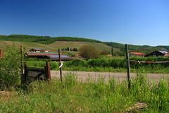 weinberge (dmytrok) Tags: grass germany deutschland gras grn garten hn wineyards heilbronn badenwrttemberg flein weinberge unterland