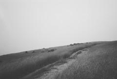 . (jaksonroutledge) Tags: california blackandwhite abstract art film monochrome analog 35mm landscape kodak abstractart fineart documentary olympus ishootfilm 400tx xa2 minimal 35mmfilm bayarea editorial pointandshoot siliconvalley minimalism westcoast minimalistic find minimalist bnw russianridge filmphotography filmphoto filmisnotdead analogfilm monoart filmcommunity buyfilmnotmegapixels instablackandwhite analogvibe