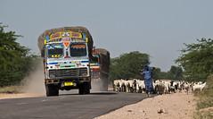 Rajasthan (stefano barz) Tags: india strada camion pecore pastore gregge