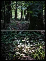 dark forest diptych (kazimierz.pietruszewski) Tags: light contrast forest spring high diptych darkness 21 low border poland polska wiosna