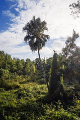Southlands, Bermuda (jonathan charles photo) Tags: wild art nature topf25 photo jonathan charles jungle bermuda southlands