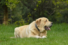 (FROM PYRLANDIA kennel) Tags: 15b