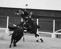 _DSC0589 (chris30300) Tags: france les cartagena corrida toro palavas rejon palavaslesflots flots languedocroussillonmidipyrnes languedocroussillonmidipyrn